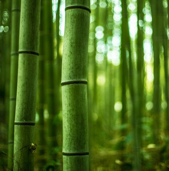 bamboe tafelbladen